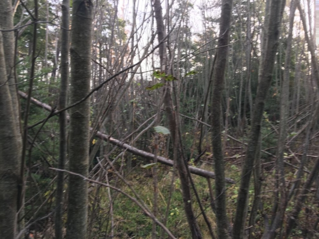 Vacant Land- 4771 S Skyline Dr, Cedar