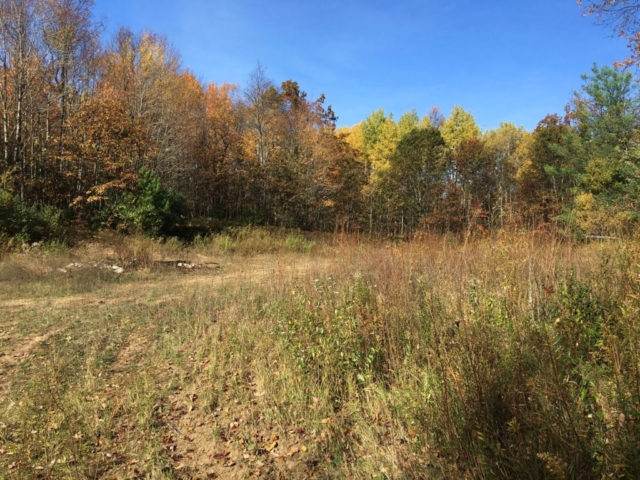 Wooded Land- 4930 East Townline Lake Road